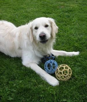 Faro, chien médiateur